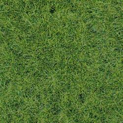 Trávní koberec -lesní půda-