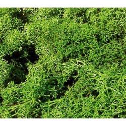 Islanský mech -světle zelená- 250g