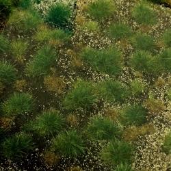 Lesní půda