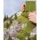 Trávní porost -divoká tráva- lesní půda