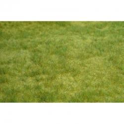 Trávní porost -jarní tráva-