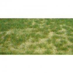 Trávní porost -letní tráva-