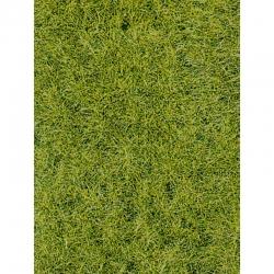 Divoká tráva -lesní půda-