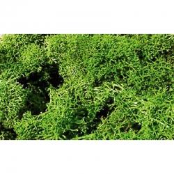 Islandský mech - zelený 75g