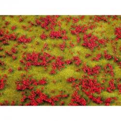 Kvetoucí louka červená