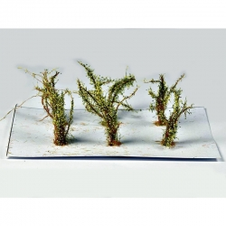 Střední keře -mikro listí - zelená dubová-