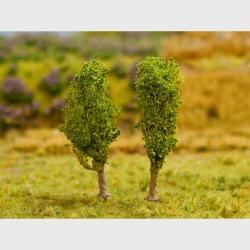 Stromy -líska-