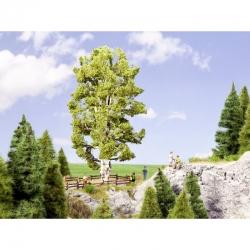0,H0 strom -rozvětvená bříza-