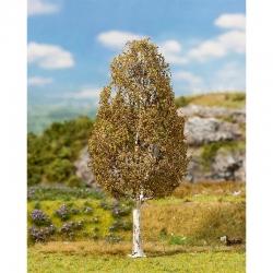 Strom -bříza-