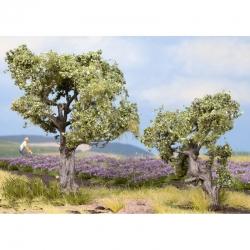 H0,TT stromy -olivovník-