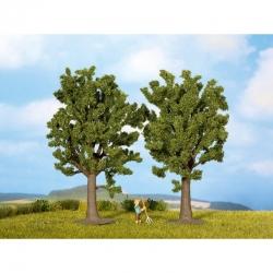 H0,TT stromy -buk-