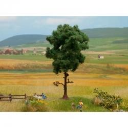 Stromy -borovice-