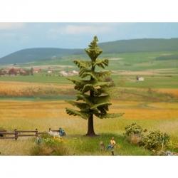 Stromy -smrk-