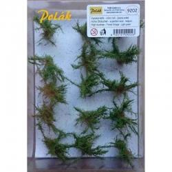 Vysoké keře -mikro listí-  světle zelená - 15kusů