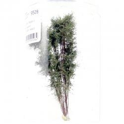 Vícekmenný strom -podzim 3- 12-13cm