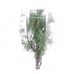 Vícekmenný strom -zelená světle- 8-10cm