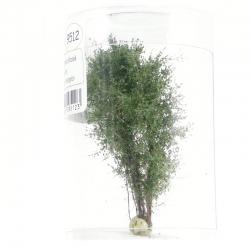 Vícekmenný strom -zelená břízová- 8-10cm