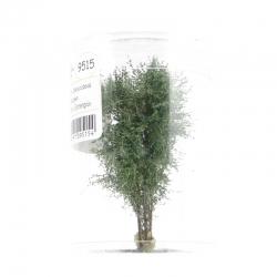 Vícekmenný strom -zelená dubová- 8-10cm