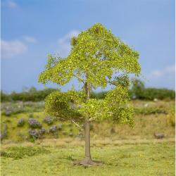 Strom -jasan-
